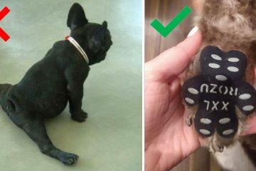 Dog Pad grips