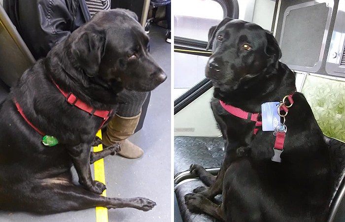 Eclipse rides the bus to go to the dog park