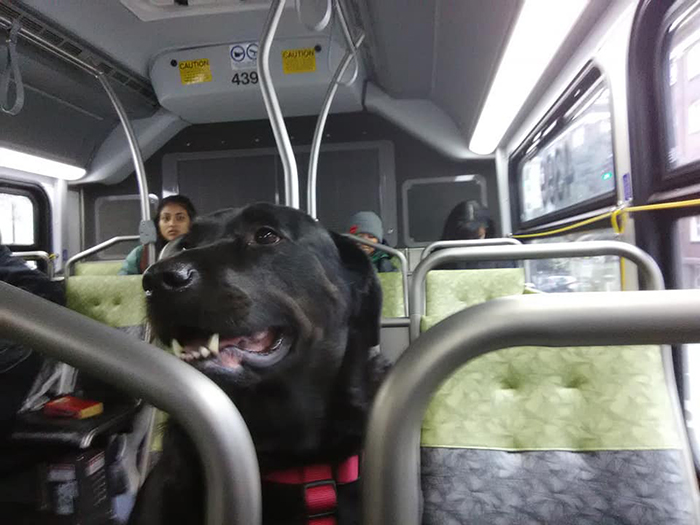 Eclipse sits in a bus
