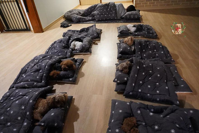Employees and Puppies' Nap Time in a Puppy Daycare Center