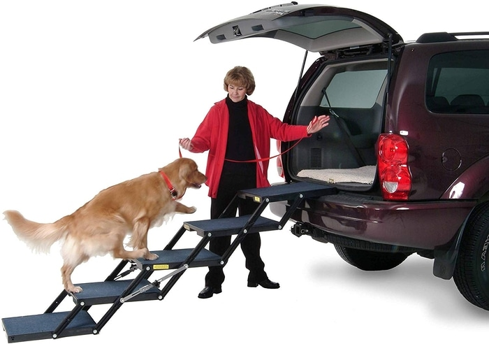 Golden Retriever Getting Into a Car Using Pet Loader