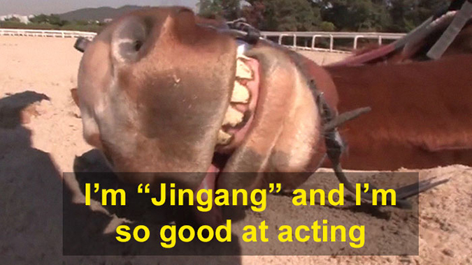 Jingang fakes being dead to avoid work
