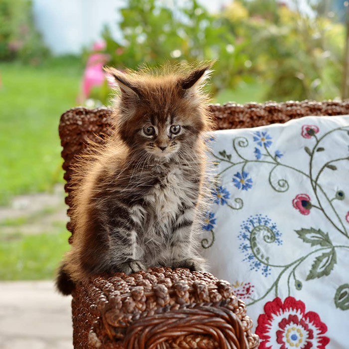 Kitten on a Woven Chair