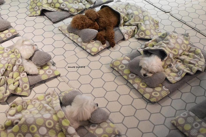 Puppies' Nap Time in a Puppy Daycare Center