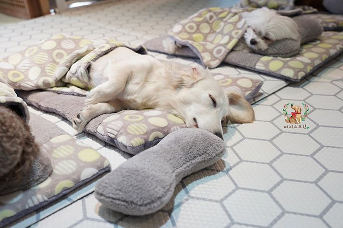 Puppies' Nap Time in a Puppy Spring Daycare Center