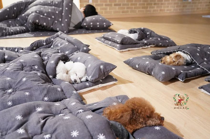 Puppies Sleeping on Beds with Blankets On