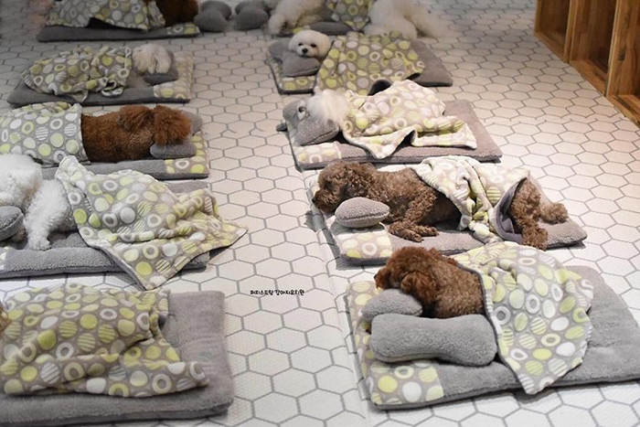Puppy Spring Daycare Center