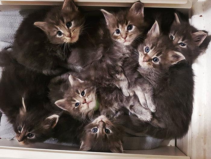 Seven Gray Kittens