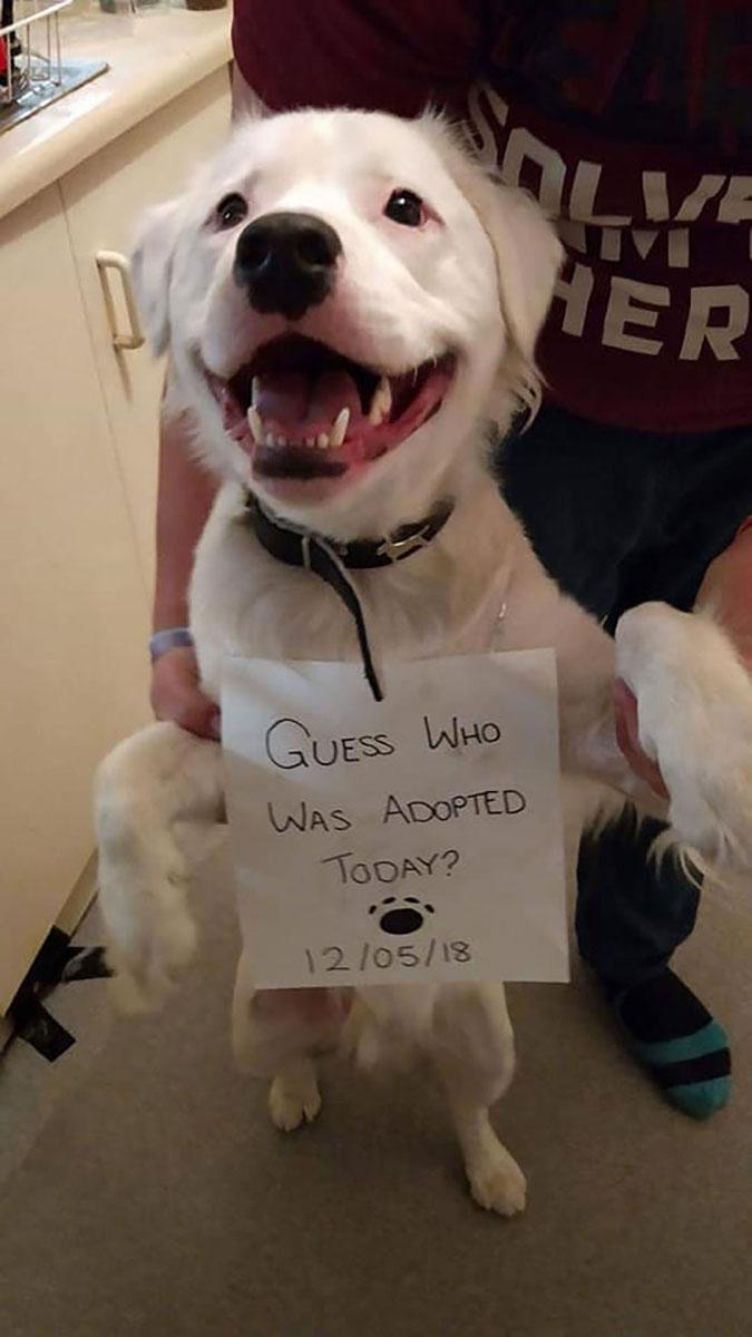 Shiro on adoption day