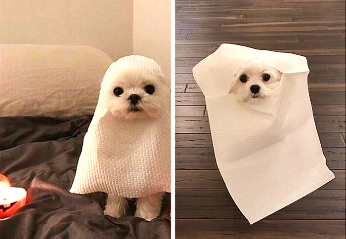 Shopping Disasters Dog Halloween Costume Product Photo Versus Actual Product