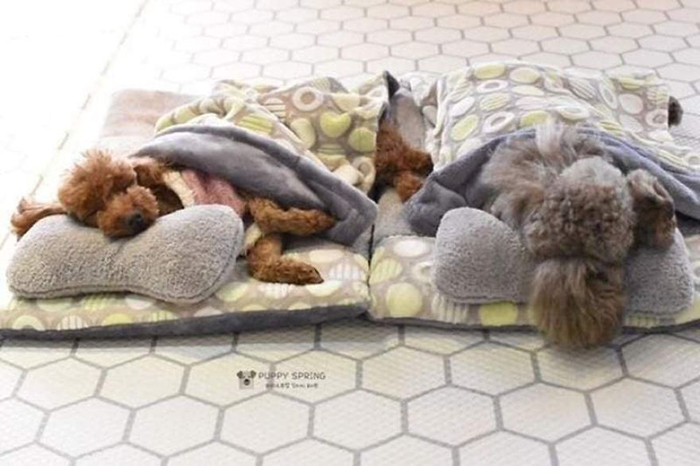 Sleeping Puppies in a Puppy Daycare Center Brown and Gray