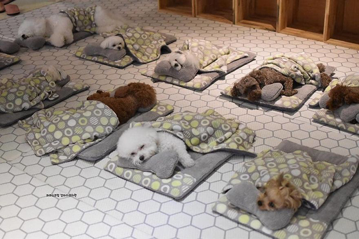Sleeping Puppies in a Puppy Daycare Center