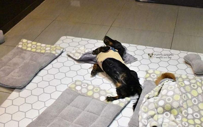 Sleeping Puppy in a Puppy Daycare Center Black