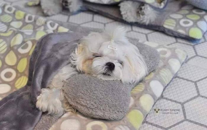 Sleeping Puppy in a Puppy Daycare Center White