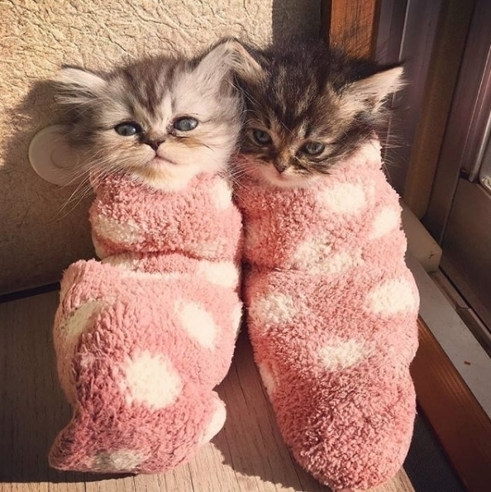 Two Kittens Wrapped in Towels