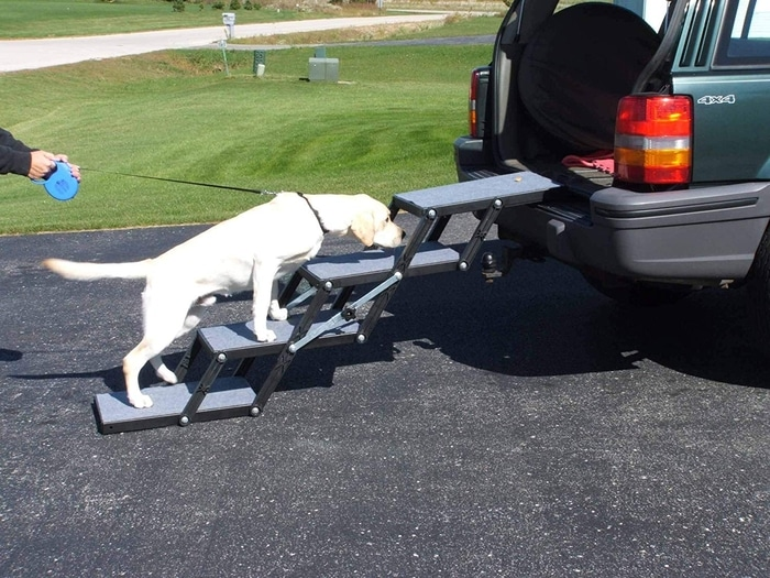 White Dog Getting Into a Car through 4-step Foldable Dog Stairs