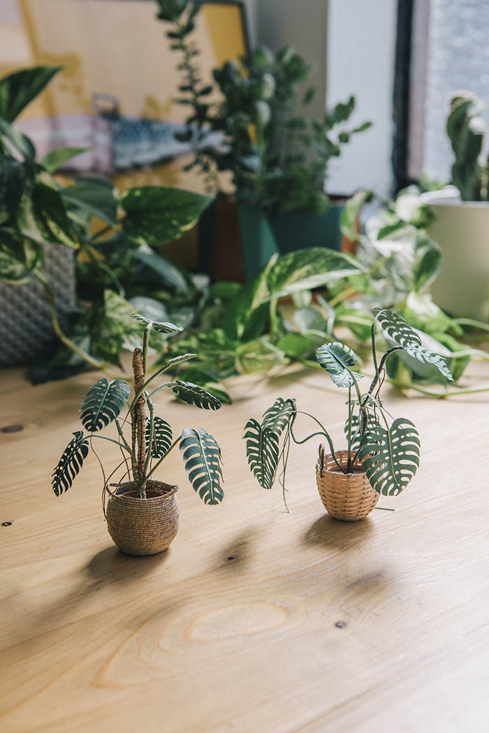 a pair of monstera paper plants in different paper baskets