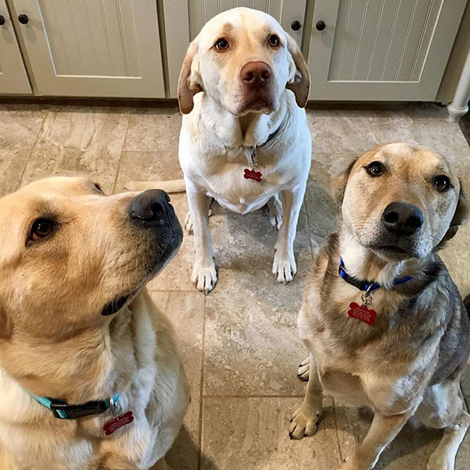 a trio of dogs with funny dog tags