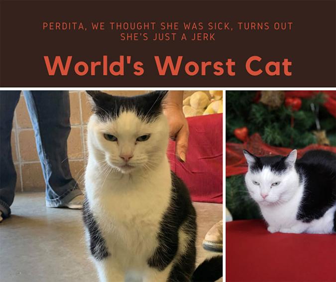 adoption ad for perdita the world's worst cat