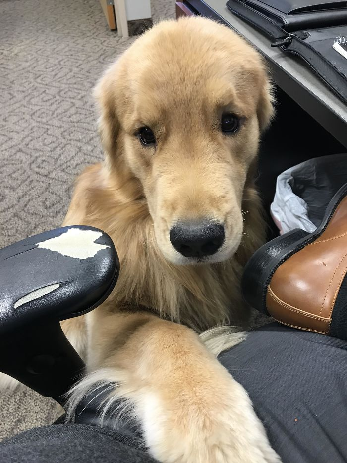 adorable office dog