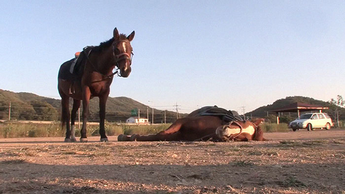 another horse chides jingang for being lazy