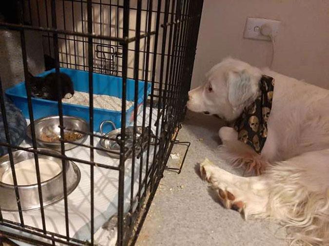 blind dog keeps kitten company