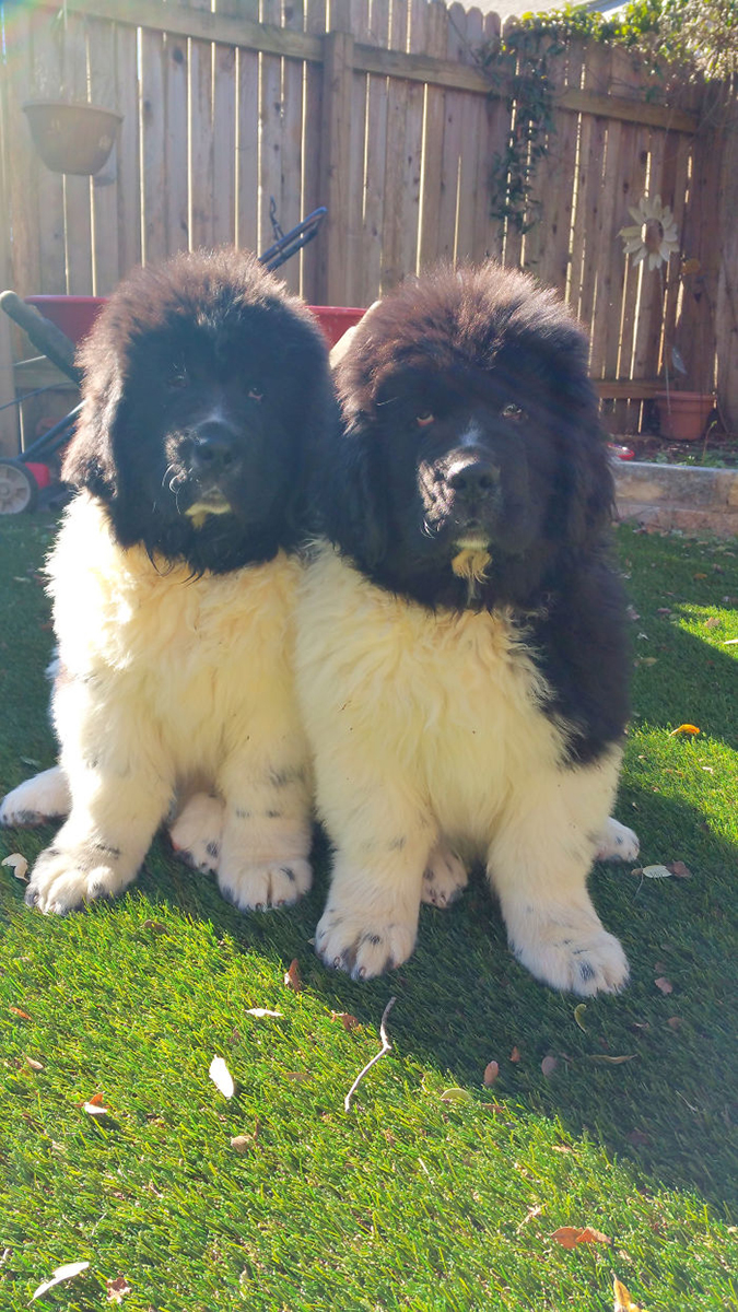 buford and wallace 11 months