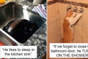cats being weird