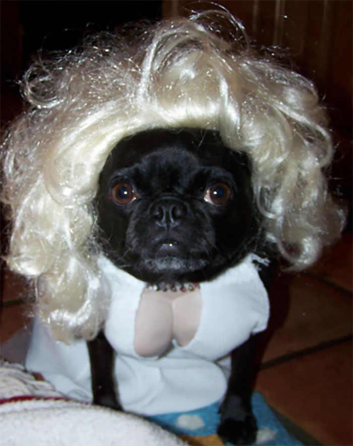 dog Marilyn Monroe costume