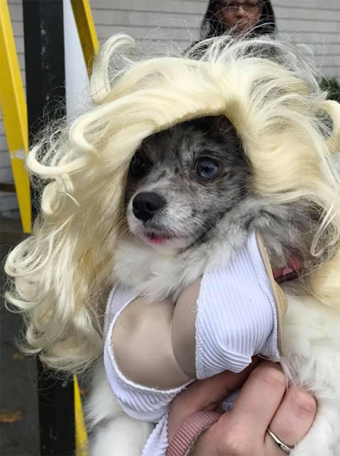 dog costume Marilyn Monroe