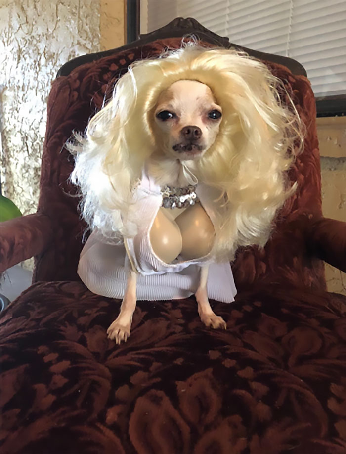 dog costume marilyn