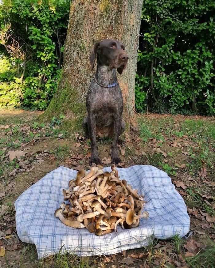 dog guards mushrooms