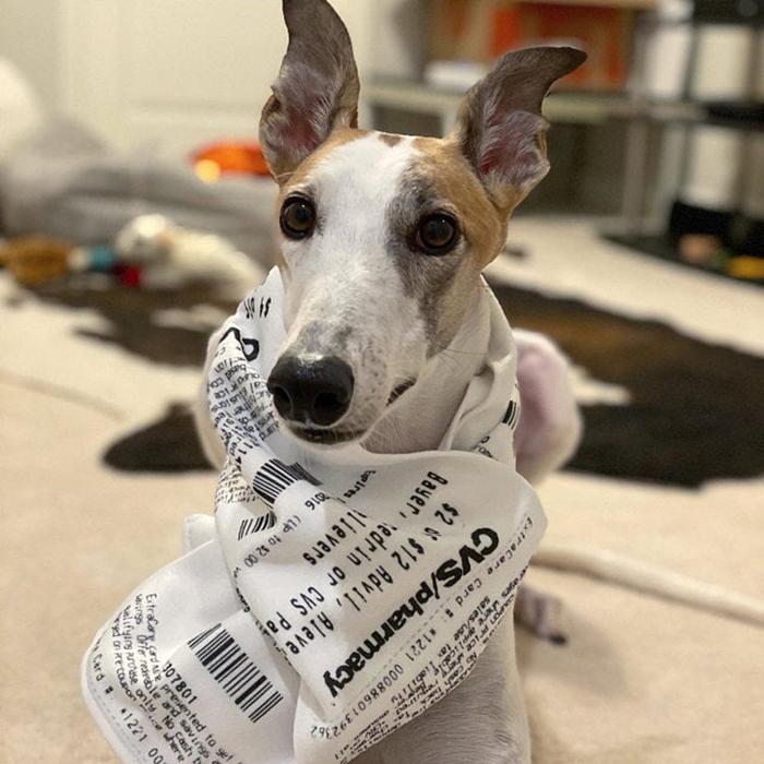 dog wearing cvs receipt scarf