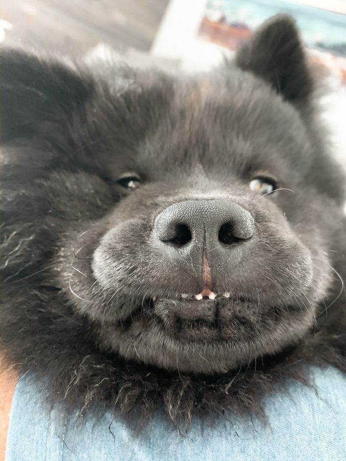 funny dog teeth bear face