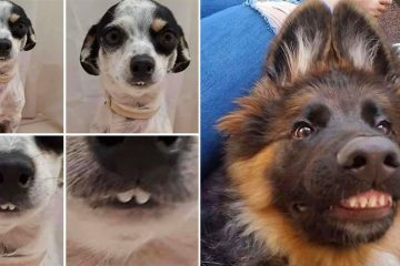 funny dog teeth photos