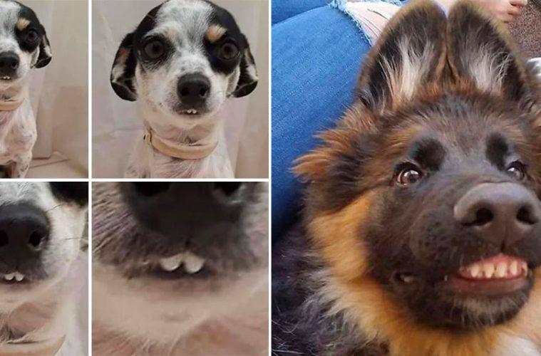funny dog teeth photos