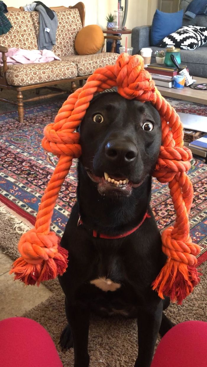 funny dog teeth rope wig