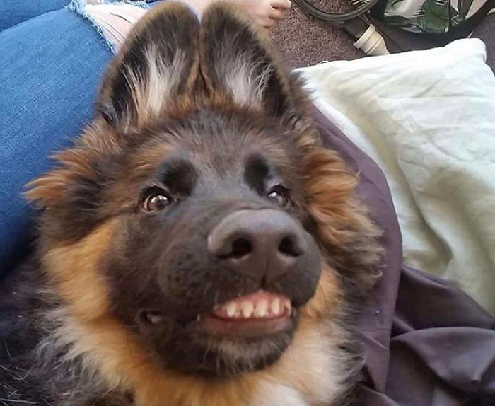 funny dog teeth sweet smile