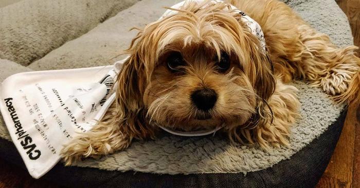 hilarious scarves design dog
