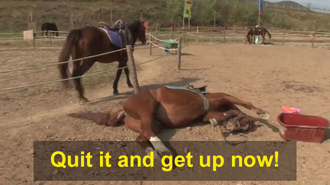 horse fakes dying out of exhaustion while other horses go about their business