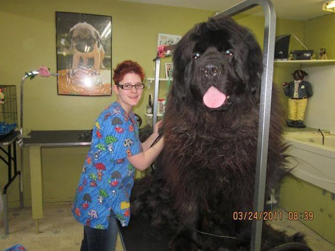 its a giant dog