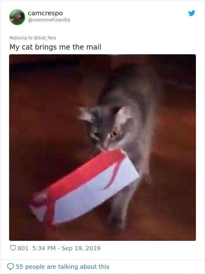 kitties with peculiar behaviors mailman