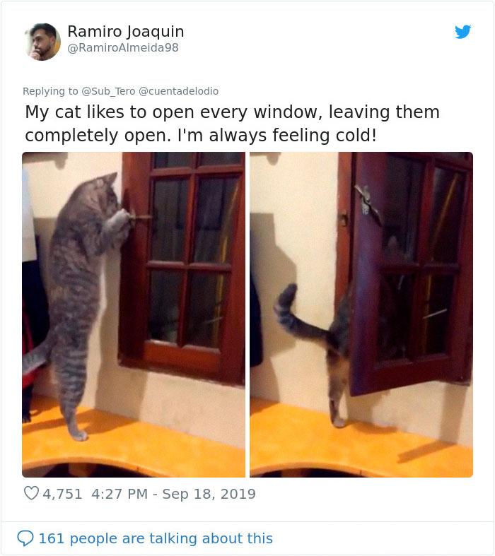 kitties with peculiar behaviors opening windows