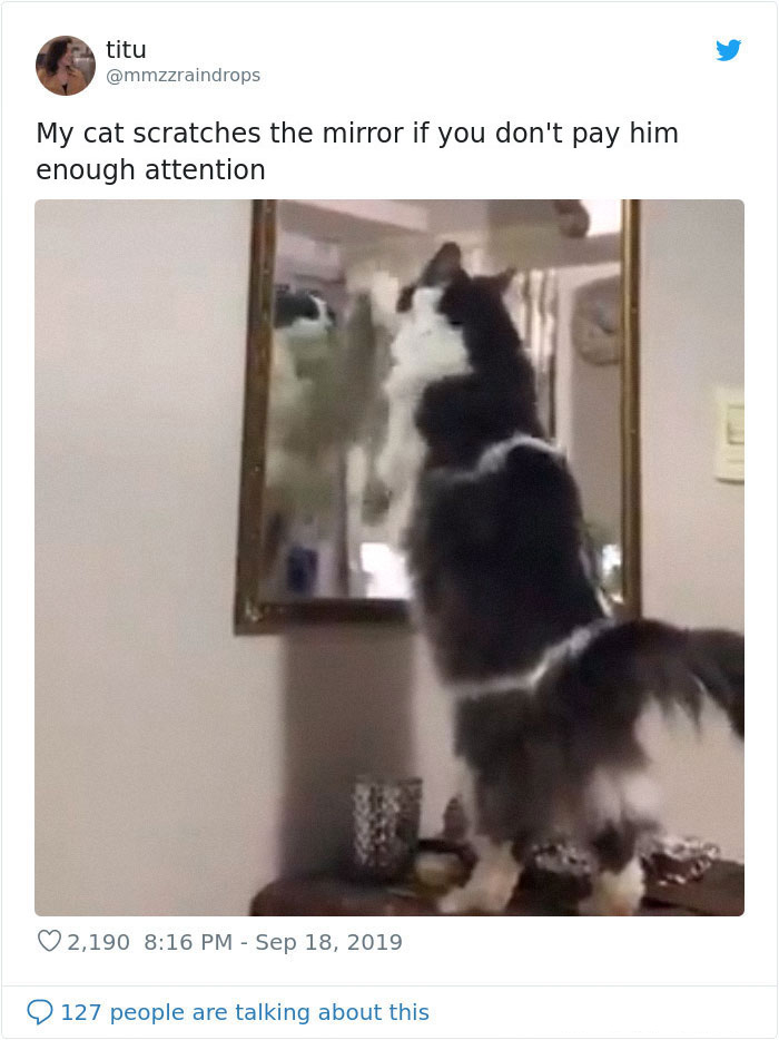 kitties with peculiar behaviors scratching mirror
