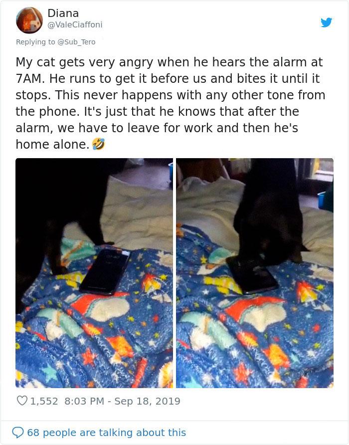 kitties with peculiar behaviors stopping alarm tone