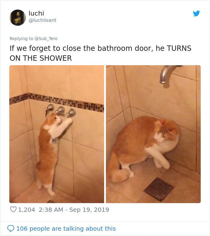 kitties with peculiar behaviors turns on shower