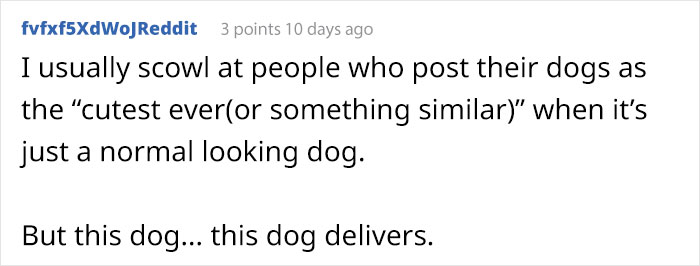 lady lookalike puppy comment fvfx