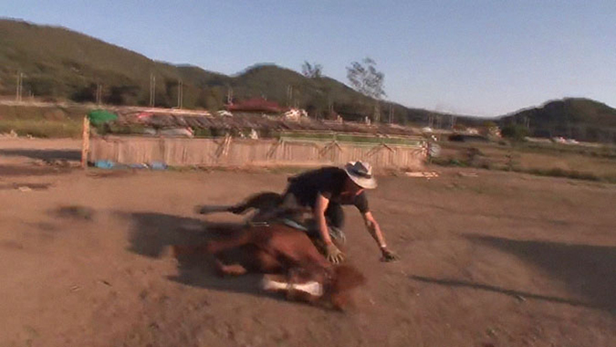 lazy horse falls to ground