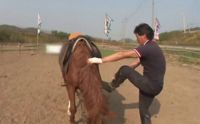 man attempts to mount the dramatic horse