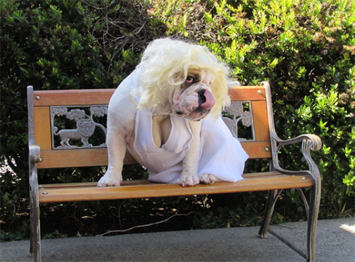 marilyn monroe dog costume funny